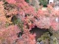 紅葉の京都 大山崎山荘美術館.mp4
